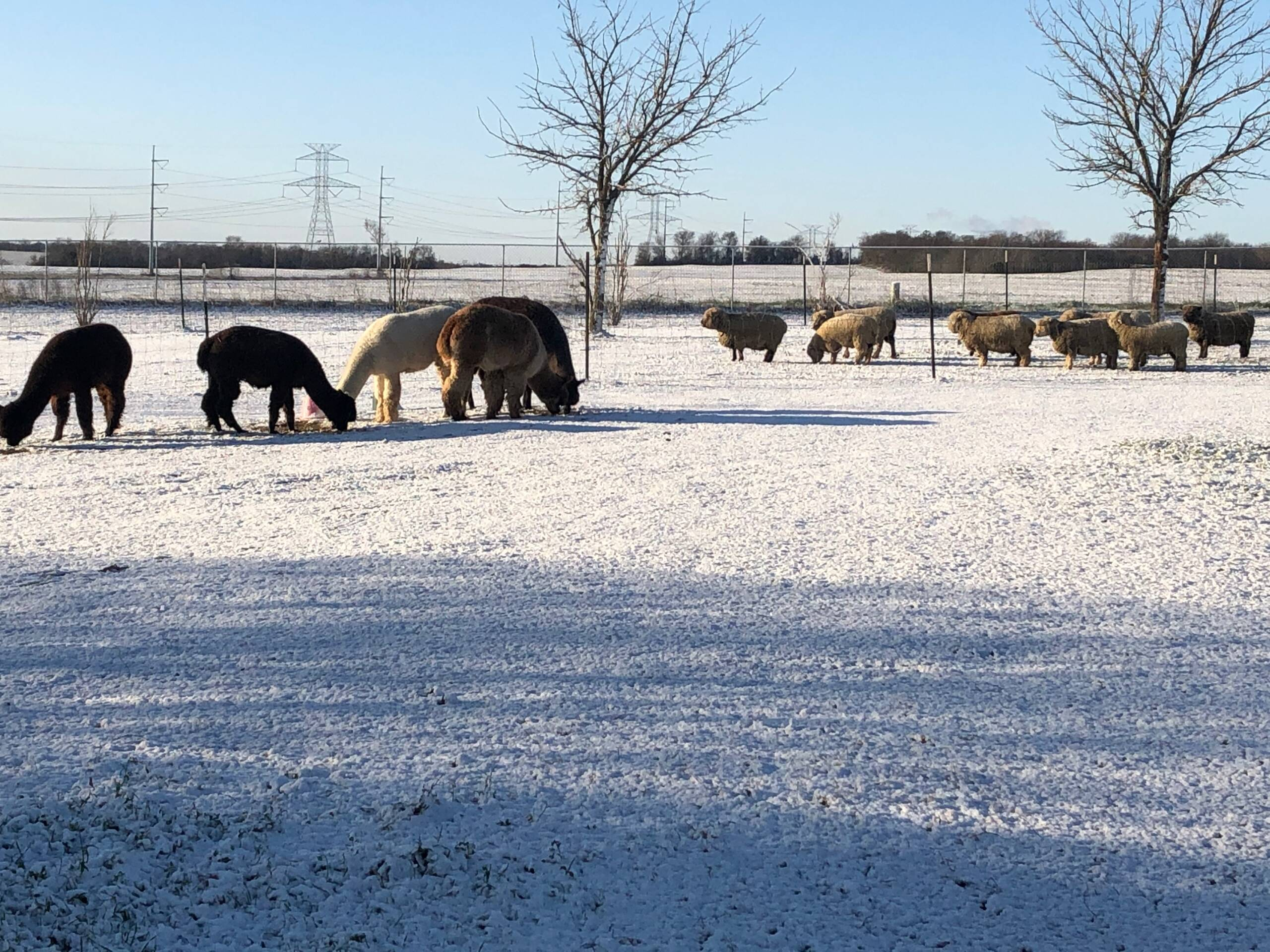 Winter on the farm.  Snow?