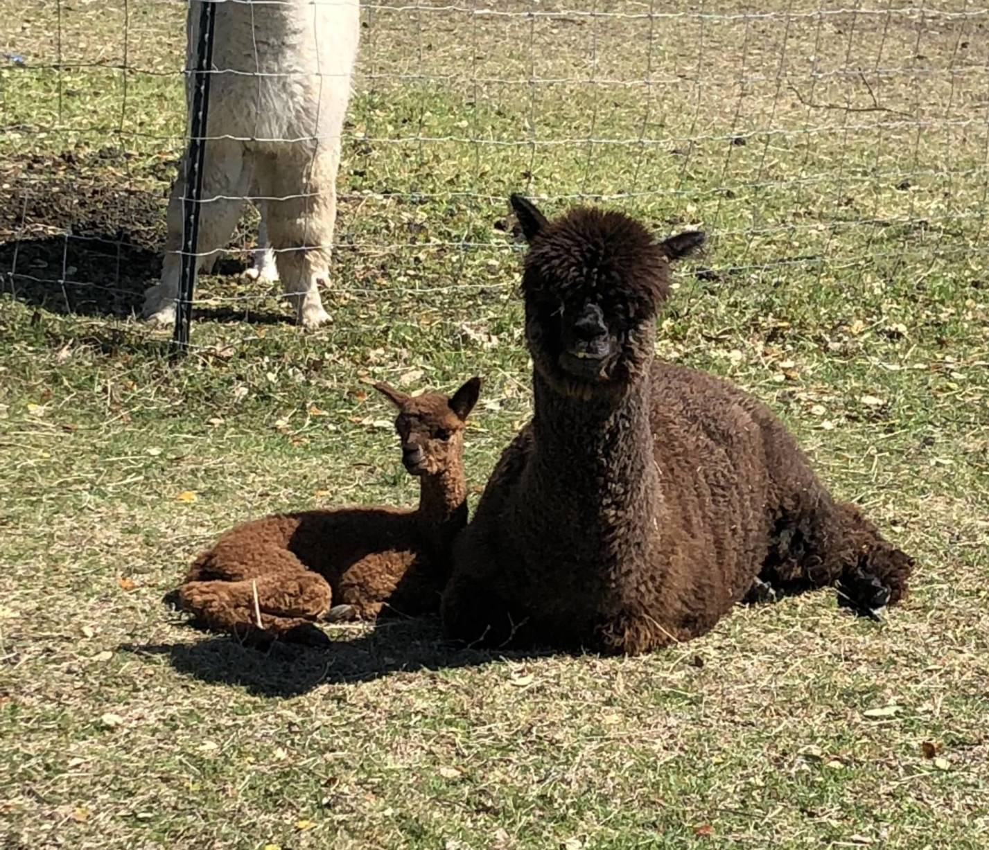 Mama and Baby Enjoy the sun